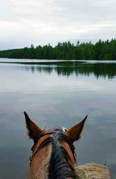 Horse Country Campground Ontario between the ears