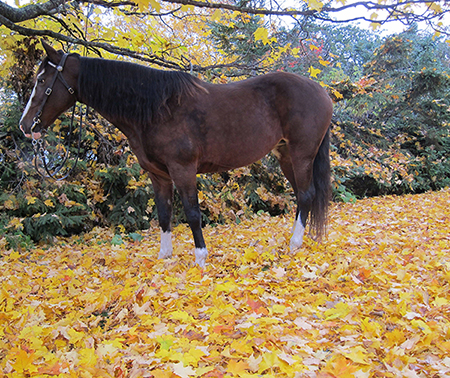 horse in fall leaves