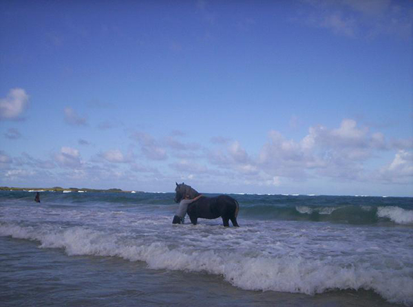 woman and horse in ocean at laie beach oahu hawaii