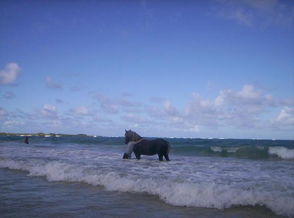 woman and horse in ocean at laie beach oahu hawaii