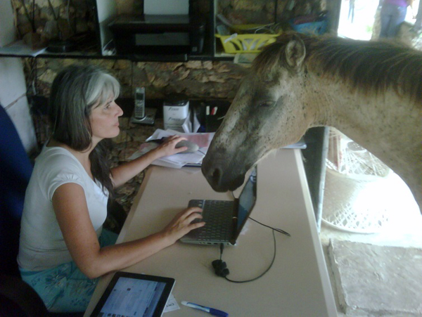 horse office rancho montana dominican republic