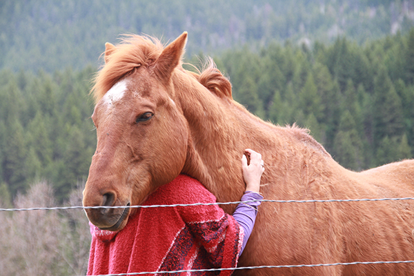 horse healing retreat vacation British Columbia