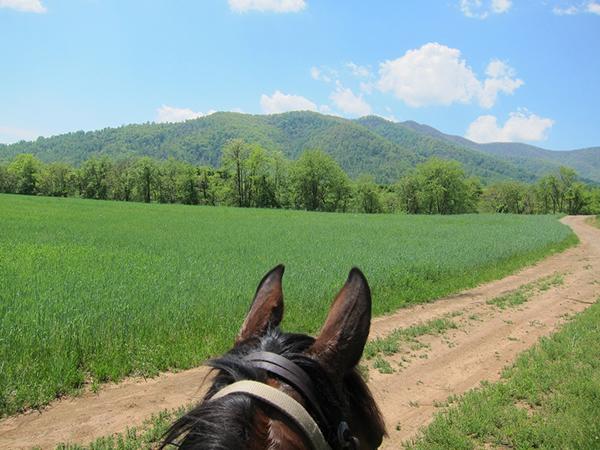 horse riding Virginia trails Shenendoah
