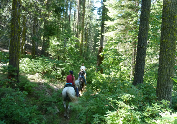 Trail heading into Nelder Grove