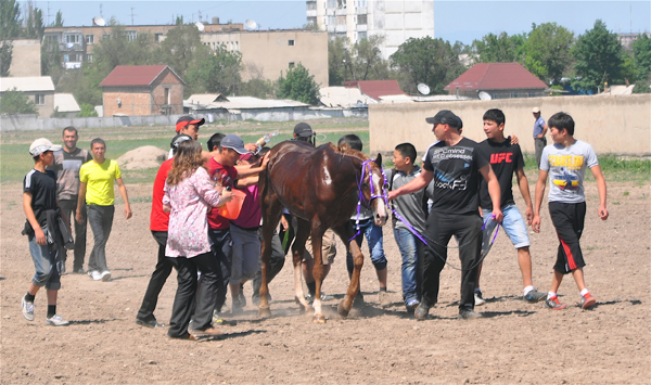 horse on point of collapse at Bishkek hippodrome