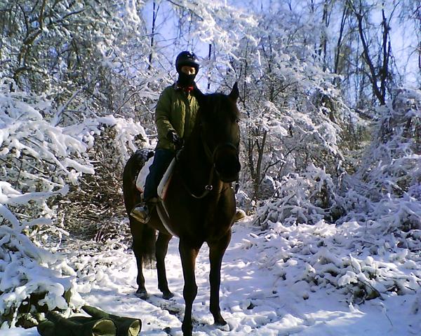 horse riding snow
