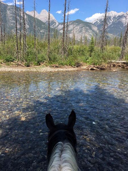 riding horses through river in banff national park