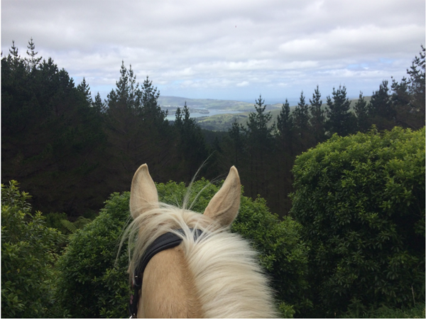 between ears view of pauatahanui inlet at battle hill forest park in new zealand