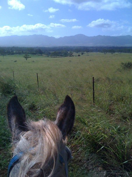 between the ears view on horseback of koa ridge hawaii