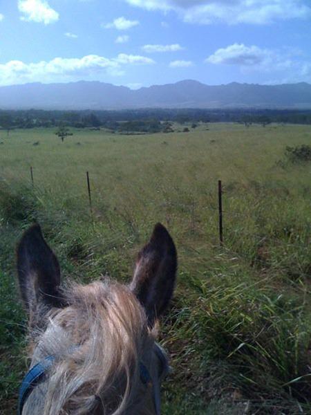 between the ears view on horseback of koa ridge hawaii