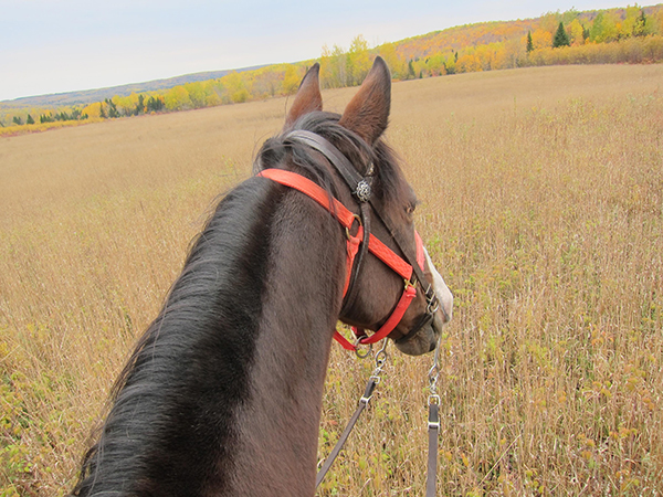 horseback riding in maine