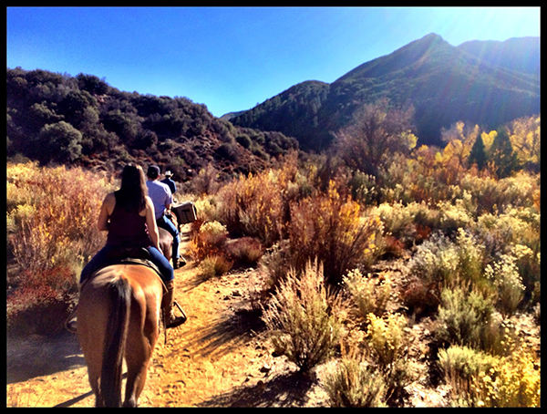horseback riding california