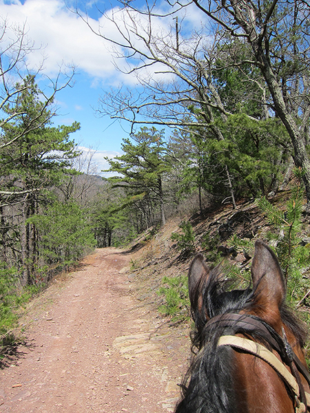 between the ears view of horse trails at george washington national forest