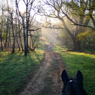 horseback riding in cinderella woods at windsor great park uk
