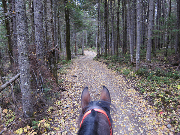 horseback riding in the pine trees northern maine