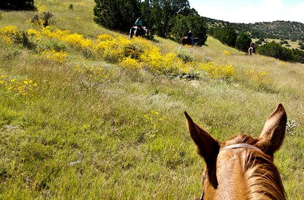 horseback riding nm wildflowers