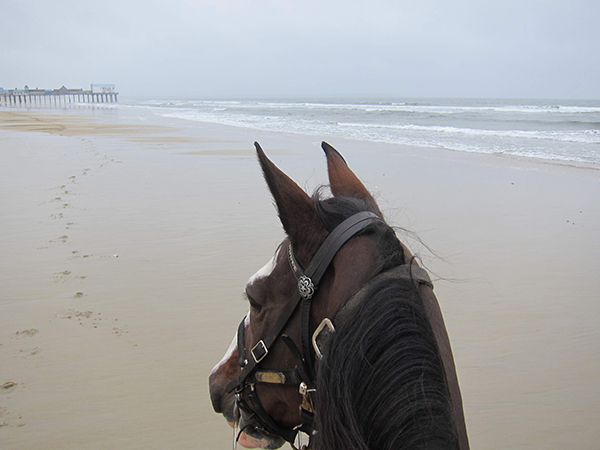 horseback riding old orchard beach