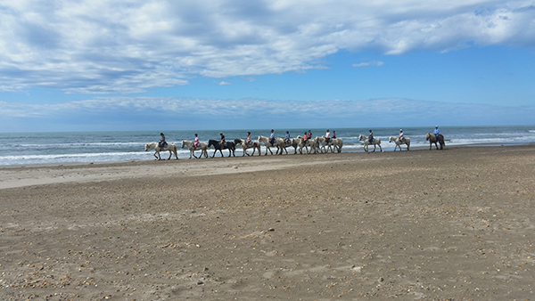 horseback riding on the beach in camargue france
