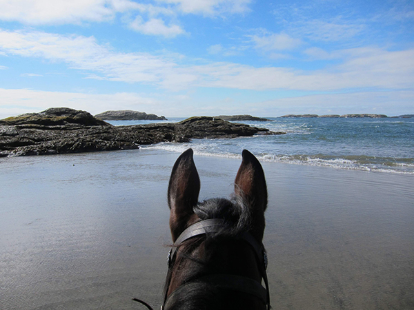 horseback riding popham beach maine