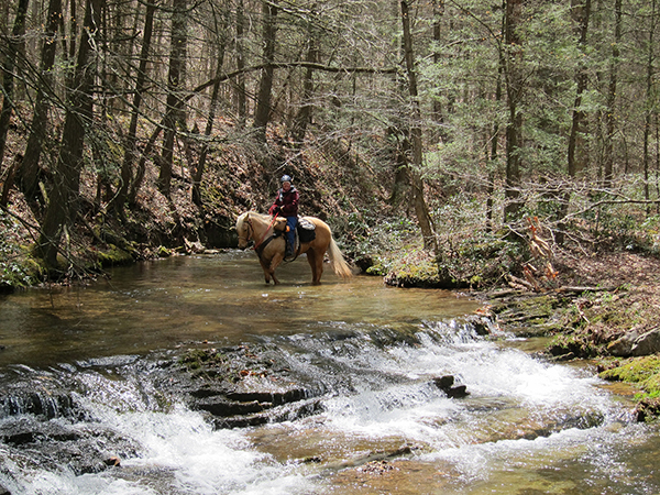 horseback riding through creek at george washington national forest