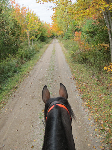horse trails at moosehorn national wildlife refuge maine