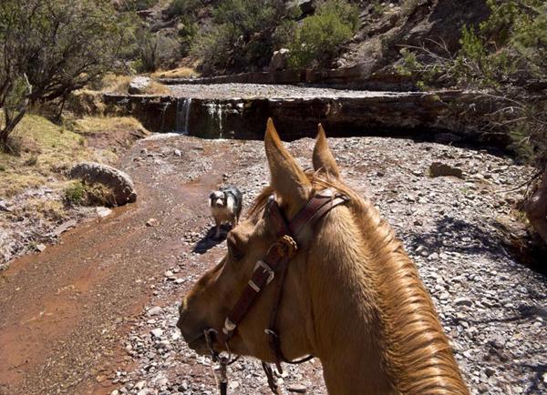 horseback new mexico stream
