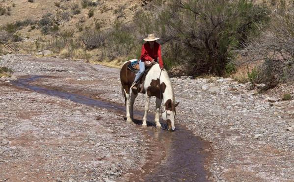horseback stream nm