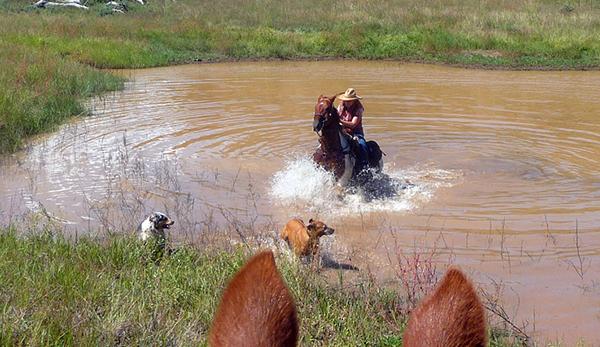 horseback swimming