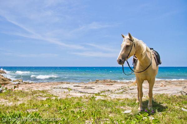 horses beach jamaica braco stables