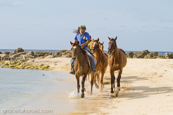 jamaica swimming with horses