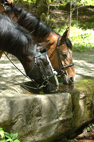 horses drinking fountain vermont