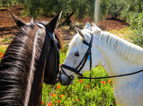 horses at cortijo uribe spain