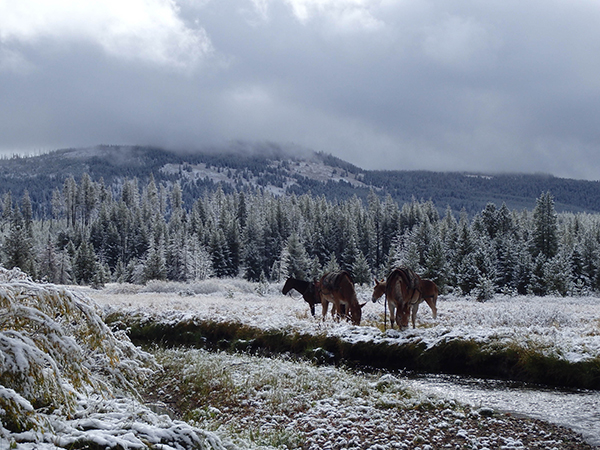 snow at equestrian campsite at yellowstone state park