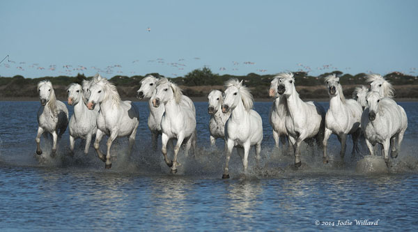 Horses Of Camargue Photography Tour