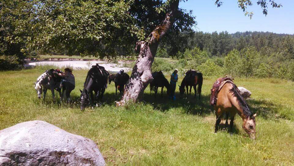 horses under trees o grady trails green river washington