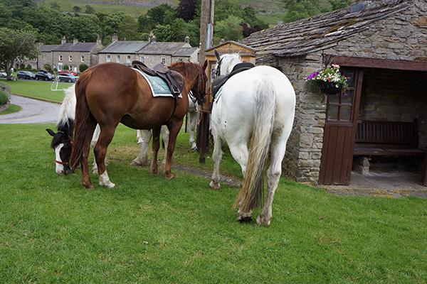 horses at the pub england