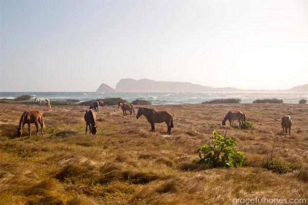 horses st lucia caribbean vacation
