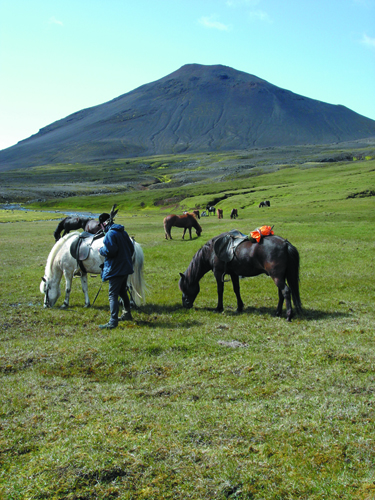iceland horseback riding vacations