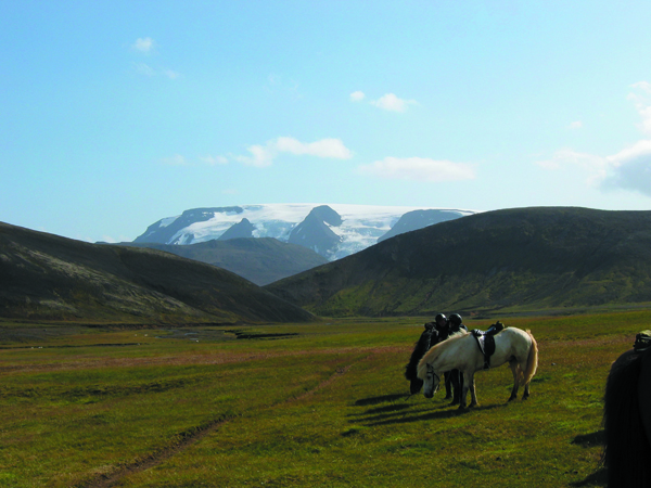 iceland horseback riding tours