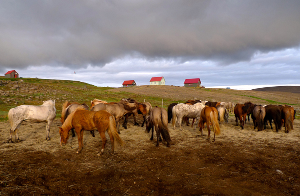 Iceland Horse Riding Vacations