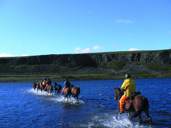 iceland horse river crossing