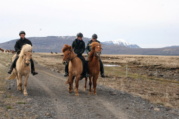 horse drive in Iceland