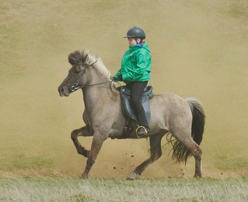 icelandic saddles and tack