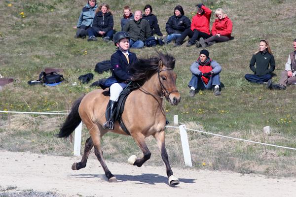 Icelandic horse show
