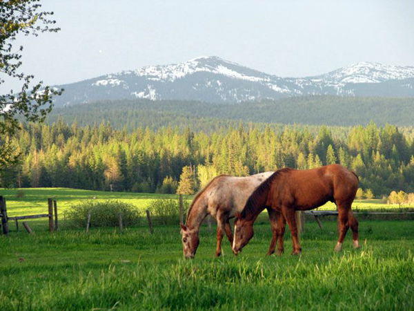 idaho guest ranch