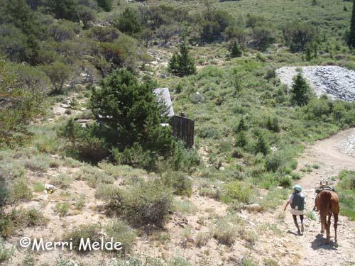 Idaho horseback riding adventures