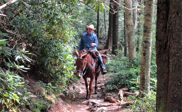 cherokee national forest horse trails