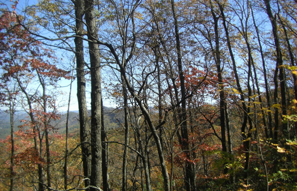 tennessee cherokee national forest views