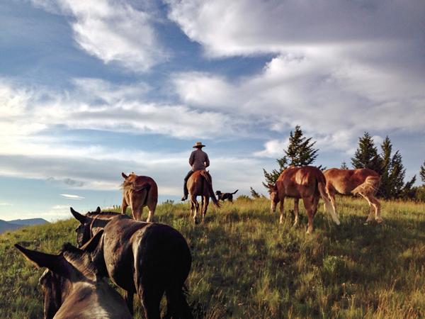 Big Sky Bandits Mules
