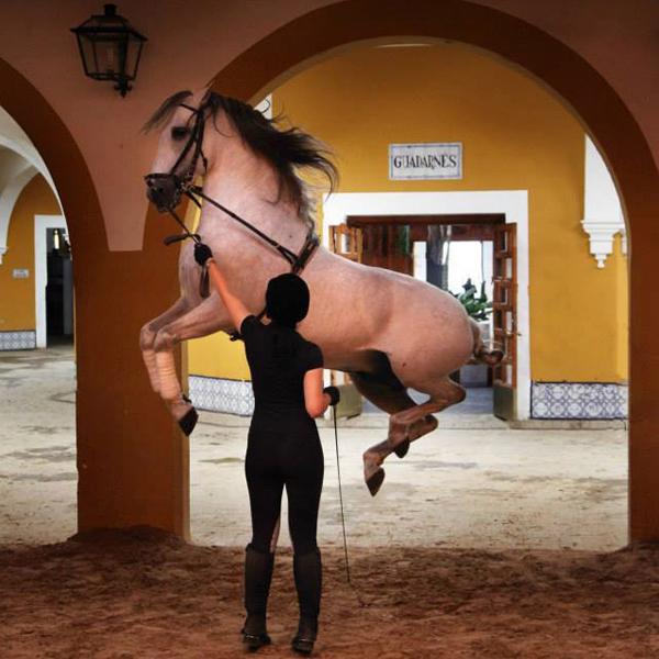 Equi Geo Real Escuela Jerez de la Frontera Spain Horse